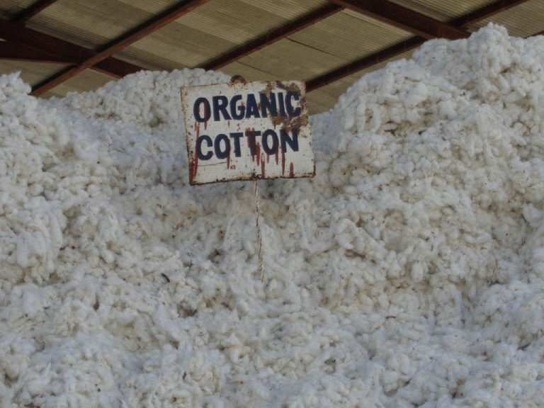 3picked cotton